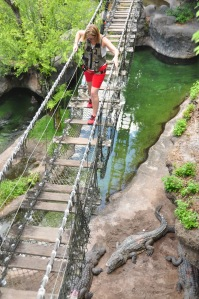 Walking over crocodile bridge